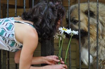 Социализация взрослой собаки. Павел Ижболдин - инструктор по социализации собак