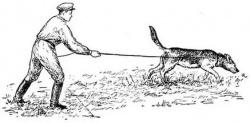 Курс дрессировки: розыскная собака