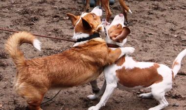 «Коррекция поведения собак» - курс дрессировки в Москве. Школа профессиональной дрессировки «Кинологический центр Сокольники».