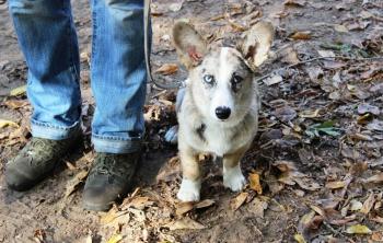 Дрессировка собак в Москве. Павел Ижболдин - инструктор по дрессировке собак
