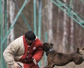 Фигурант. Защитная дрессировка собак в Москве. КЦ Сокольники