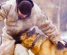 Павел Ижболдин - кинолог, инструктор по дрессировке собак. Защитная курс дрессировки собак.