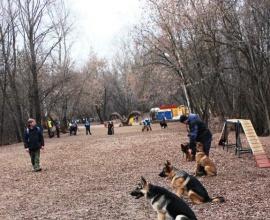 Социализация собаки. Павел Ижболдин - инструктор по социализации собак