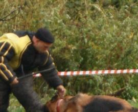 Павел Ижболдин - кинолог, инструктор по дрессировке собак. Защитная дрессировка собак.
