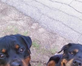 Социализация собаки к другим собакам. Павел Ижболдин - инструктор по социализации собак