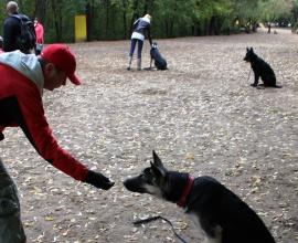 Курс дрессировки собаки - послушание. Павел Ижболдин - кинолог, инструктор по дрессировке собак