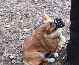 Дрессировка собак в Москве. Коррекция поведения собаки.