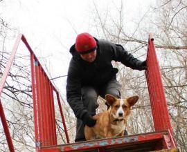 Дрессировка собак в Москве кинологом Сокольники